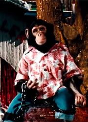 Шимпанзе Майкла Джексона станет героем биографического мультфильма