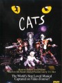Кошки / Cats