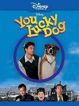 Везучий пес / You Lucky Dog