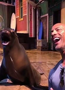 смотреть фильм Дуэйн Джонсон убедил тюленя признать его самым сексуальным