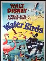 Водоплавающие / Water Birds