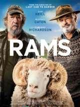 Бараны / Rams