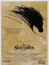 Черный скакун / The Black Stallion