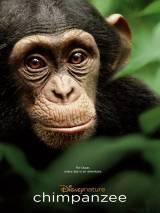 Шимпанзе / Chimpanzee