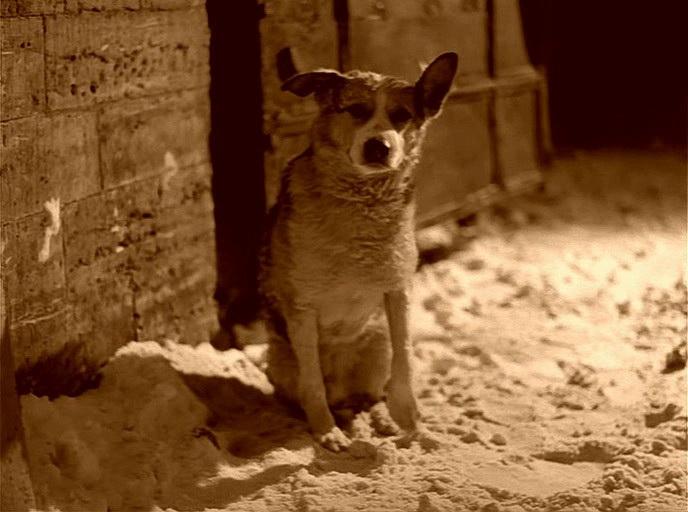 Кадр N73384 из фильма Собачье сердце (1988)