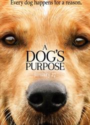 """Рецензия на фильм """"Собачья жизнь"""". Зачем собаки приходят в нашу жизнь?"""